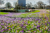 Urban Spring 1 by corngrowth, photography->flowers gallery