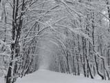 snowy January by ekowalska, Photography->Landscape gallery