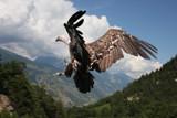 Flight 204 has landed by Paul_Gerritsen, Photography->Birds gallery