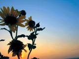 Sunrise in San Antonio by fishmoe, Photography->Flowers gallery
