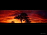 Arizona Mesquite Sunset by Delusionist, Photography->Sunset/Rise gallery