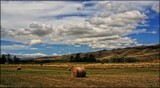 Summertime In The Valley by LynEve, photography->landscape gallery