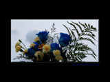 Blue Roses For Mother's Day by tigger3, Photography->Flowers gallery
