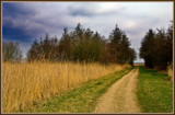 Path From Nowhere by corngrowth, Photography->Landscape gallery