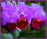 Dreaming of Orchids by trixxie17, Photography->Flowers gallery