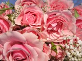 A Smile with Roses! by marilynjane, Photography->Flowers gallery