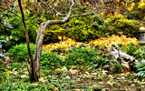 Late Autumn At Defries Gardens #2 by tigger3, photography->gardens gallery