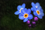 Painted Forget-me-nots by LynEve, photography->manipulation gallery