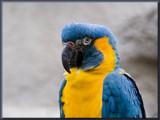 I'm a pretty boy.............. by fogz, Photography->Birds gallery