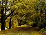 Elm Street by jojomercury, photography->gardens gallery