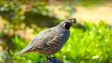 Garden Visitor by tanimara, photography->birds gallery