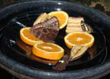 Butterfly Buffet by rhelms, Photography->Butterflies gallery