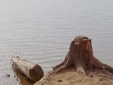 Stumped by thebitchyboss, Photography->Landscape gallery