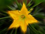 Flower 2 by rvdb, photography->manipulation gallery
