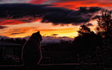 Sitting On The Fence by LynEve, photography->sunset/rise gallery
