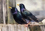 Painted Pair by allisontaylor, photography->manipulation gallery