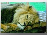 Grumpy by boremachine, Photography->Animals gallery