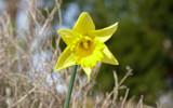 Daf 4 U by gonedigital, Photography->Flowers gallery