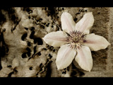flower duet ver. 02 : sandstone poetry by monkeypuzzle, Photography->Manipulation gallery