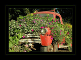 Floral Truck by verenabloo, Photography->Transportation gallery