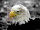 Watch It !! by Hottrockin, Photography->Birds gallery