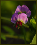 From My Garden by tigger3, Photography->Flowers gallery