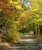 Fall Winding Road by Zava, photography->landscape gallery