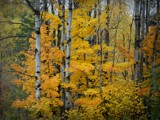 Autumn #10 by picardroe, photography->nature gallery