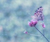 Butterfly Garden #2 by tigger3