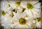 Blooms for Friday by Starglow, photography->flowers gallery