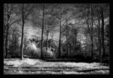 fritton forest by JQ, Photography->Landscape gallery