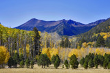 aspens at lockett meadow by jeenie11, photography->landscape gallery