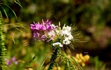 Defries Garden Foofies by tigger3, photography->flowers gallery