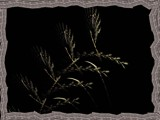 Winter wheat by Hottrockin, Abstract->Fractal gallery