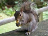 Sociable Squirrel by angelicem, photography->animals gallery