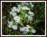 Wild flowers by GIGIBL, photography->flowers gallery