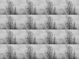 Silver Birch - Again And Again by braces, contests->b/w challenge gallery
