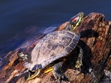 Basking in the sun by photoguy16, Photography->Animals gallery