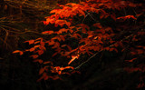Red Leaves by Eubeen, photography->nature gallery