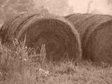 Hay Bales by lilkittees, contests->curves gallery
