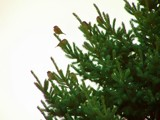 Evergreen Birds by kidder, Photography->Birds gallery