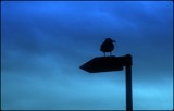 Seagull Silhouette by TheWhisperer, Photography->Birds gallery