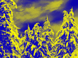 Snowadelic Trees by dkirk22, Photography->Manipulation gallery