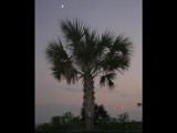 South Carolina Flag? by tadurham, Photography->Landscape gallery