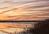 Snow Geese And A Sunset by Jimbobedsel, photography->sunset/rise gallery