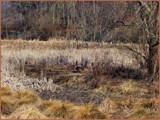 Murky Marshlands by amishy, Photography->Landscape gallery