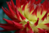 Zest by gloopical, Photography->Flowers gallery