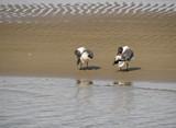 Preening by Jimbobedsel, photography->birds gallery
