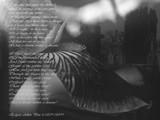 dream within a dream by kodo34, Contests->Dreams gallery
