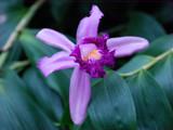 Say.....Ahhhhh! by wheedance, Photography->Flowers gallery